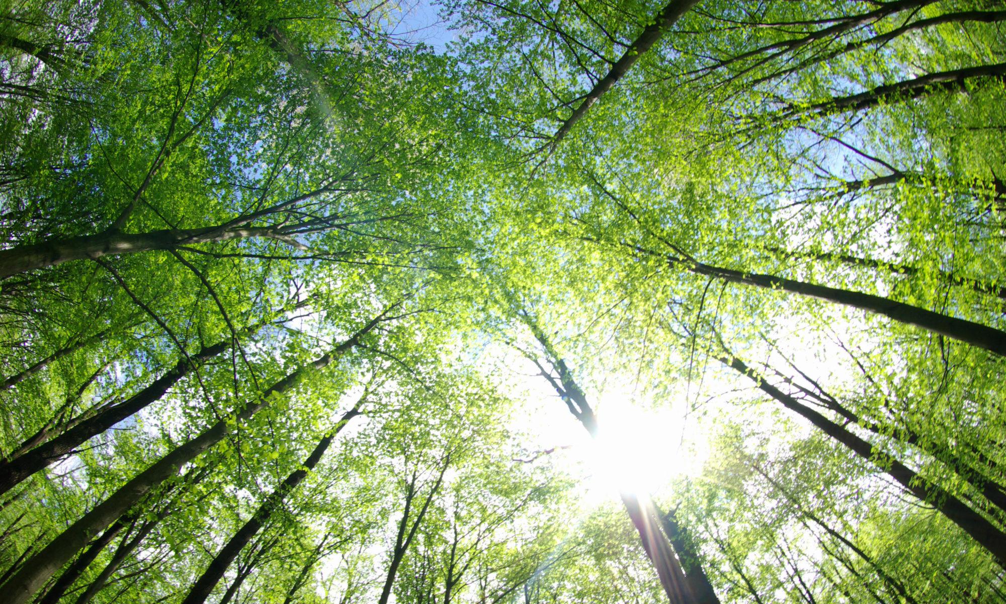 La Performance écologique : Recyclage et valorisation des dechets